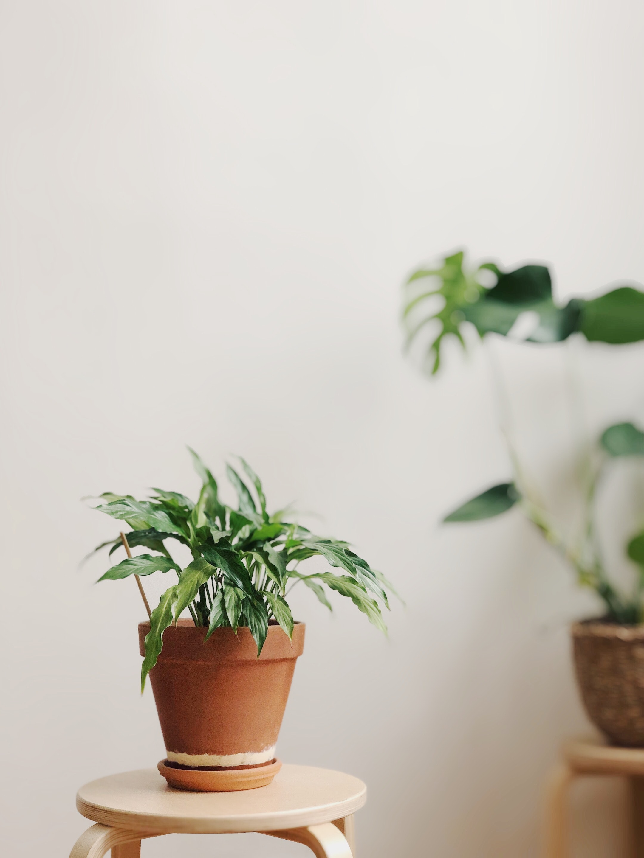 Houseplant in terracotta pot.