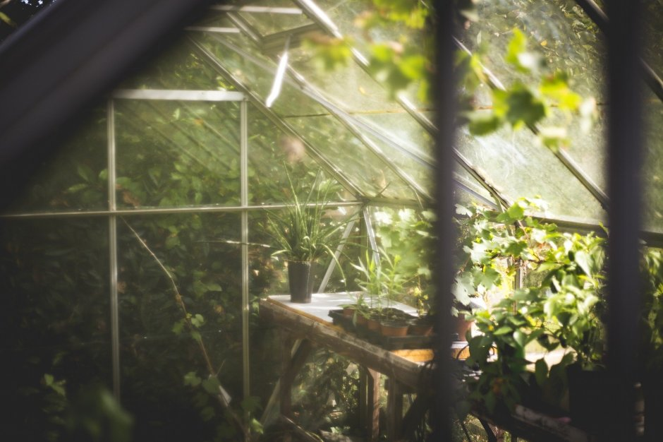 Greenhouse with sunlight and plants